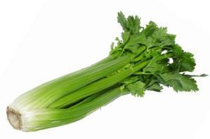 celery_442368c